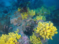 diving salento in provincia di lecce